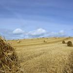 Unterschätzter Energielieferant: Strom und Wärme aus Stroh