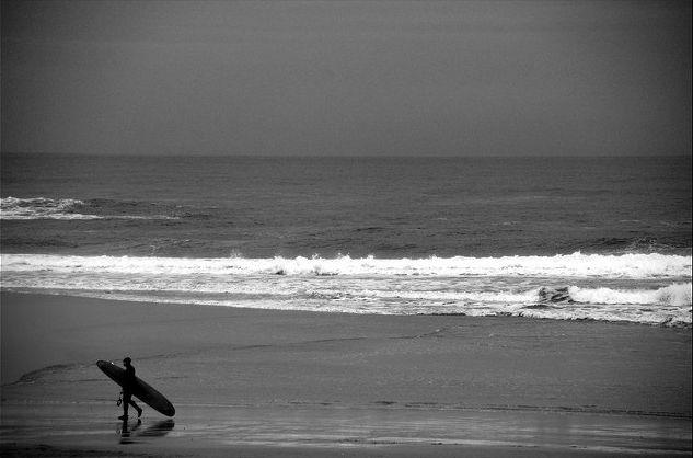 surfboard, surfbrett, pilze, positive nachrichten