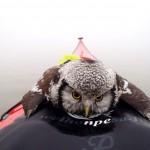 Kajakfahrer rettet Eule aus dem Wasser