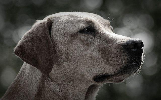 labrador, hund rettet familie, positive nachrichten