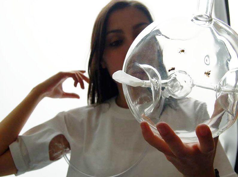 Susana Soares, Krebs, Honigbienen, Design, positive nachrichten