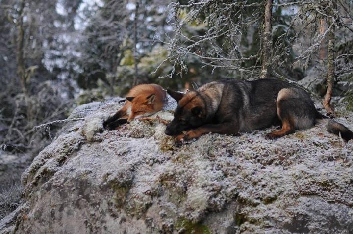 Torgeir Berge, Tinni und Sniffer2, positive nachrichten