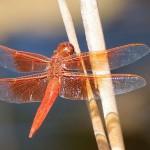 Libellenflügel – Mutter Natur hilft gegen Krankenhauskeime