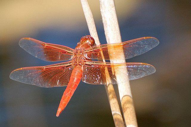 libellenfluegel, bakterien, krankenhauskeime, positive nachrichten