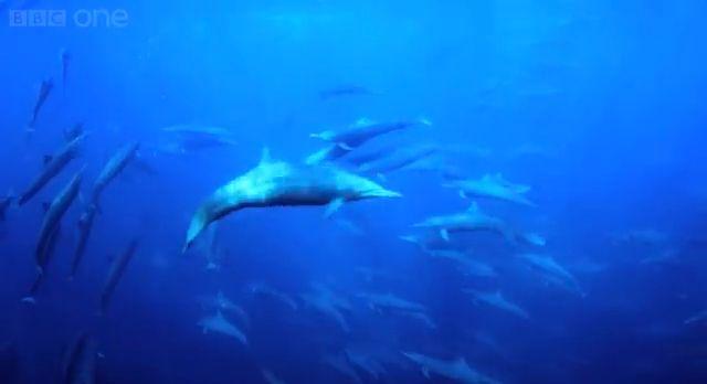 Gigantischer Delfinschwarm, positive nachrichten