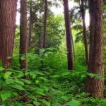Britische Regierung will vier Millionen Bäume pflanzen