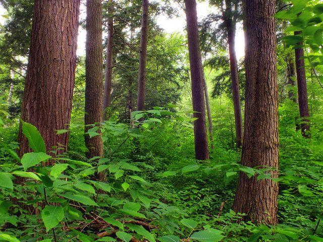 Mischwald, positive nachrichten, wald pflanzen