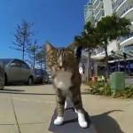 Katze Didga fährt Skateboard