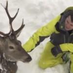 Freerider retten eingesunkenen Hirsch aus Schneemassen