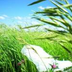 Forscher verwandeln alte Plastiktüten in Treibstoff