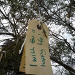 Wie ein ″Wunsch-Baum″ eine ganze Gemeinde zusammenbrachte