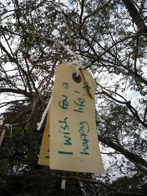 Wishing Tree, positive nachrichten