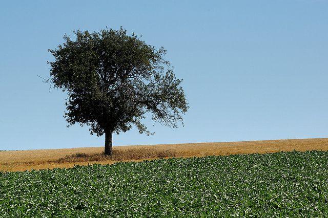 Felder, Hessen, positive nachrichten, keine gentechnik, gentechnikfrei