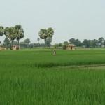 Wunderwachstum: Indischer Reisbauer fährt Rekord-Ernte ein