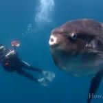 Unterwasser-Wunderwelt vor der Küste Kaliforniens