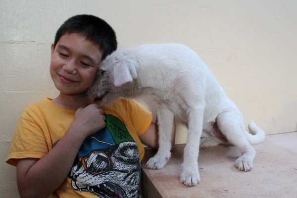 Happy Animal Club, Ken und White Puppy