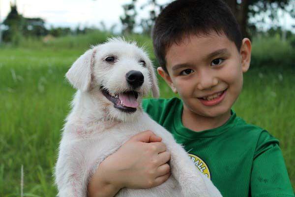 Happy Animal Club, glueckliche White Puppy
