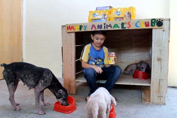 Happy Animal Club, unterernaehrte Hunde beim Fressen