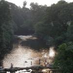Alte Handys – große Hilfe für den Regenwald