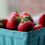 Alternativer, chemiefreier Anbau von Erdbeeren durch Sonnenenergie