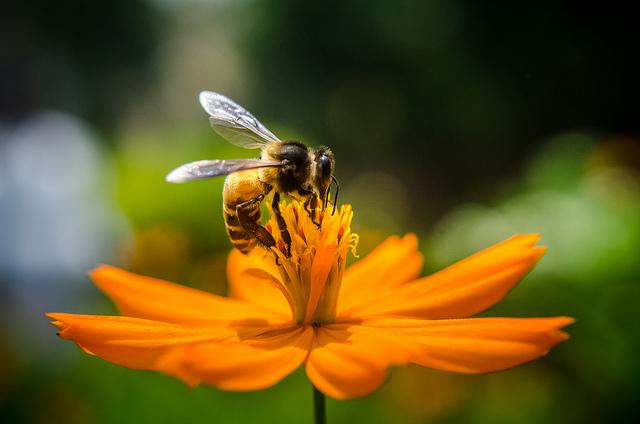 Honigbiene, positive nachrichten