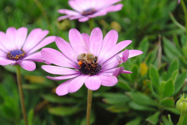 Biene in Mexiko, positive nachrichten