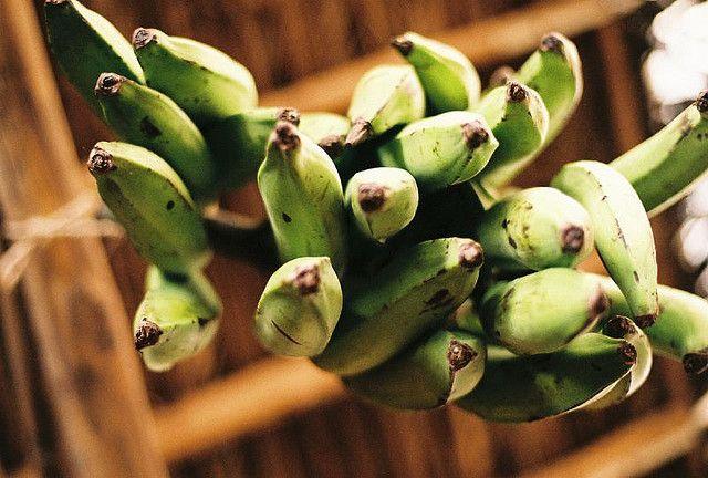 gruene Bananen, Staude, positive nachrichten
