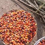 Palmölhersteller einigen sich auf Stillhalteabkommen