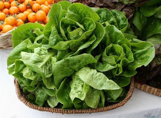 Gemuese, Salat, Aquaponik, positive nachrichten