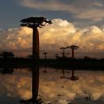 Madagaskar: Neue Generation erforscht und pflegt die Natur