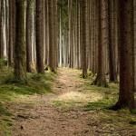 Ökologisch Wohnen – Ratgeber für ein grünes Zuhause