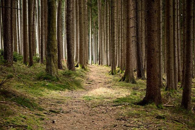 wald, baeume, natur, positive nachrichten