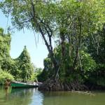 Frauen aus Sri Lanka sollen Mangrovenwälder retten