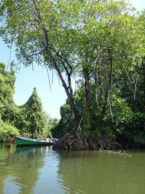 Mangrovenwaelder retten, positive nachrichten