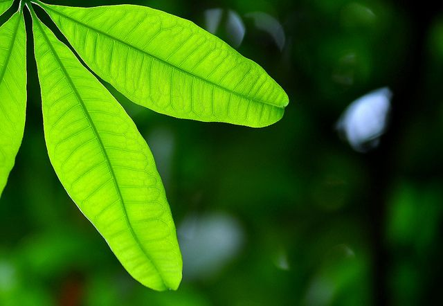 plant-e, gruene energie, positive nachrichten