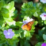 ″8 wichtige Punkte über das Leben″ – Paulo Coelho