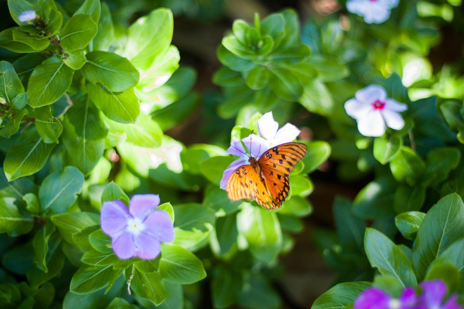 Schmetterling sitzt auf einer fliederfarbenen Blüte