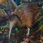 Für Neuseeland sind jetzt alle Tiere empfindungsfähige Lebewesen