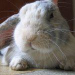 Endlich – Australien verbietet Tierversuche für Kosmetika