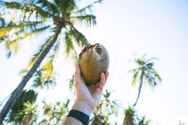 Eine Hand, die eine Kokosnuss hält,vor einem Hintergrund aus Palmen