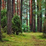 Nachhaltige Forstwirtschaft: Zurück zur Natur, zurück zum Mischwald