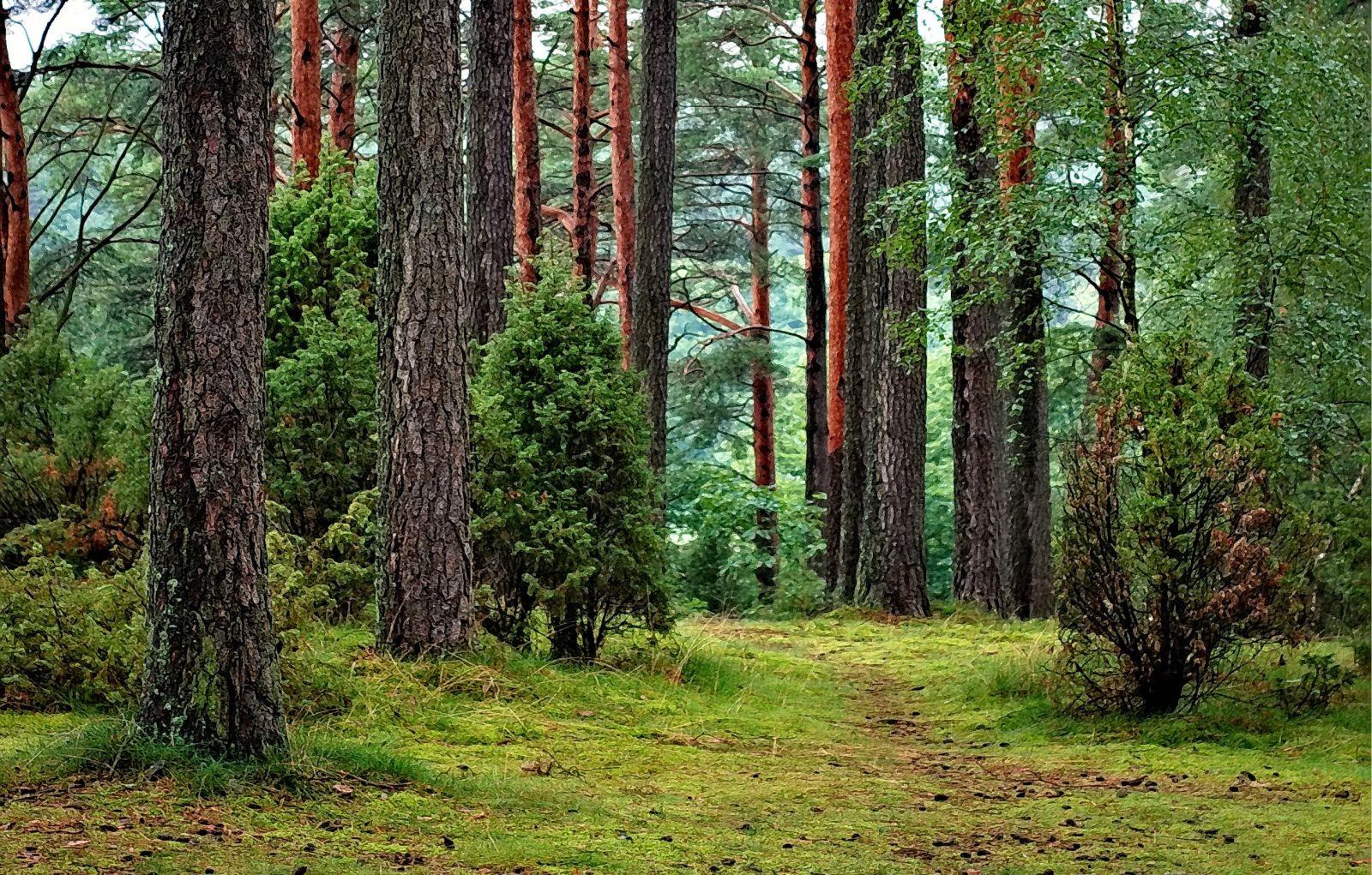Mischwald mit Laub- und Nadelbäumen