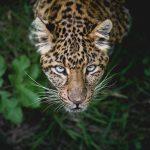 Vom Ödland zum Regenwald