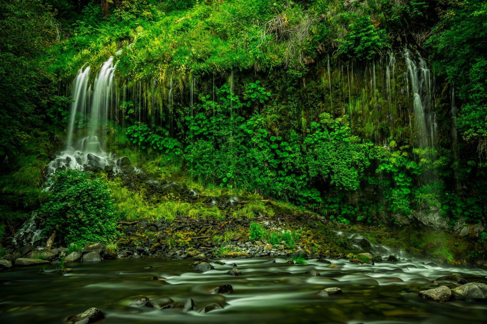 Grüner Regenwald mit Wasserfall und Bach