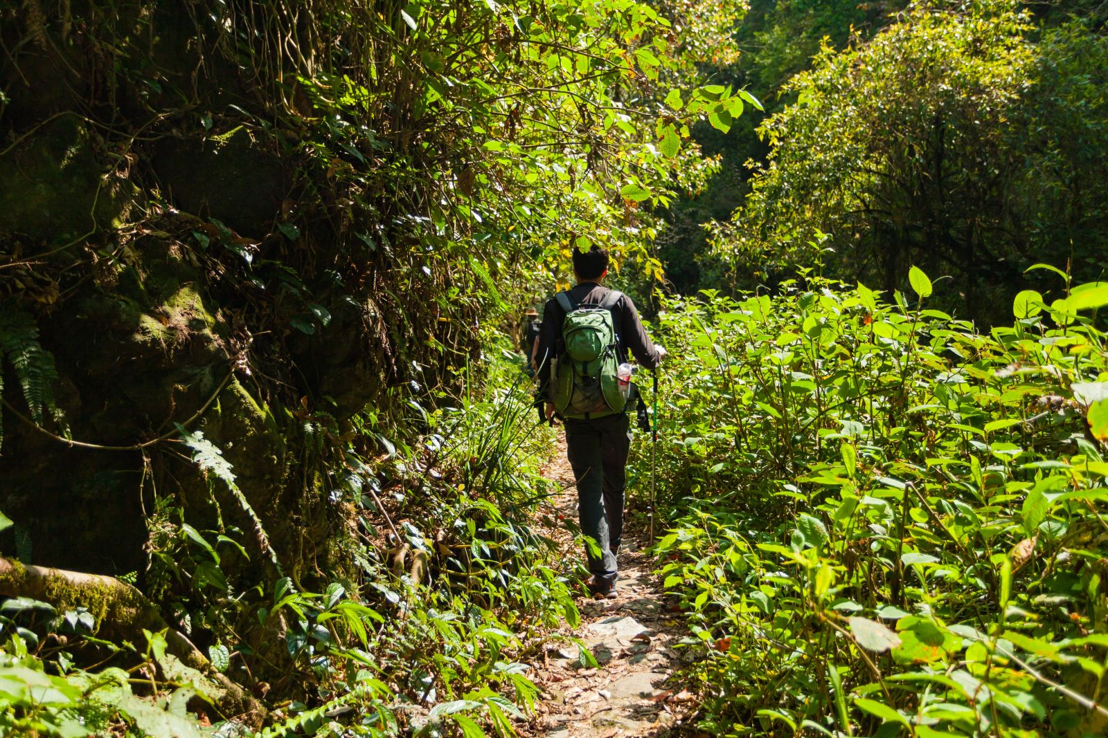 Eine Wandergruppe geht auf einem schmalen Pfad hintereinander. Um sie herum ist nur grüne Natur.