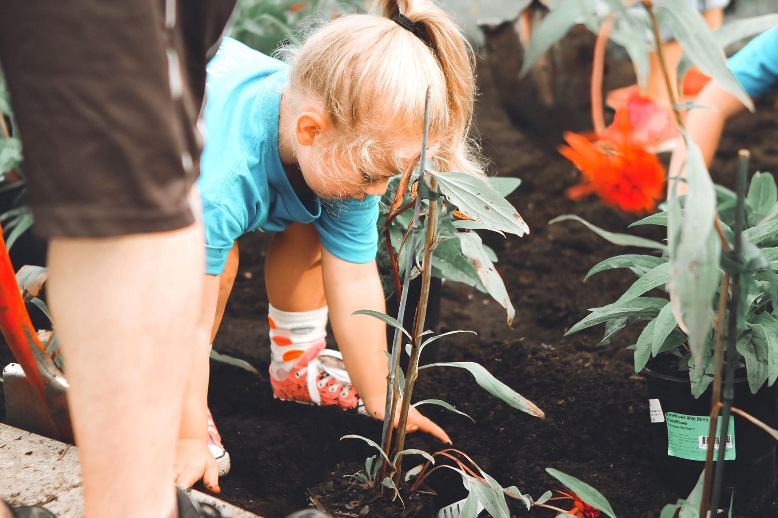 Ein kleines Mädchen hilft beim einpflanzen von Gemüse im eigenen Beet und klopft behutsam die Erde fest.