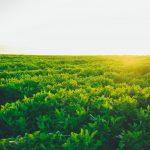 Wüstensand wird zu fruchtbarem Boden in sieben Stunden