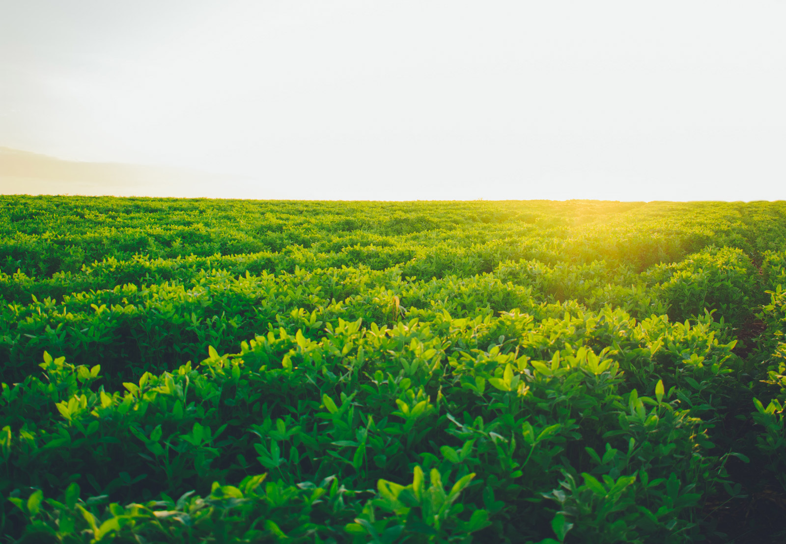Im Vordergrund sieht man ein grünes Ackerland. Im Hintergrund scheint die Sonne aufs Feld und man sieht in der Ferne die Siluette einer Hügellandschaft in der oberen linken Bildseite