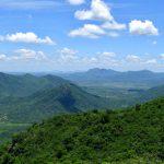Wälder von der Fläche Frankreichs sind seit 2000 nachgewachsen